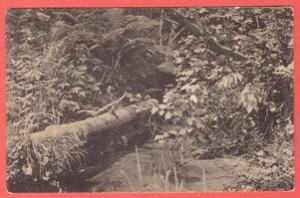 Старинная открытка Вид по реке Гайве.